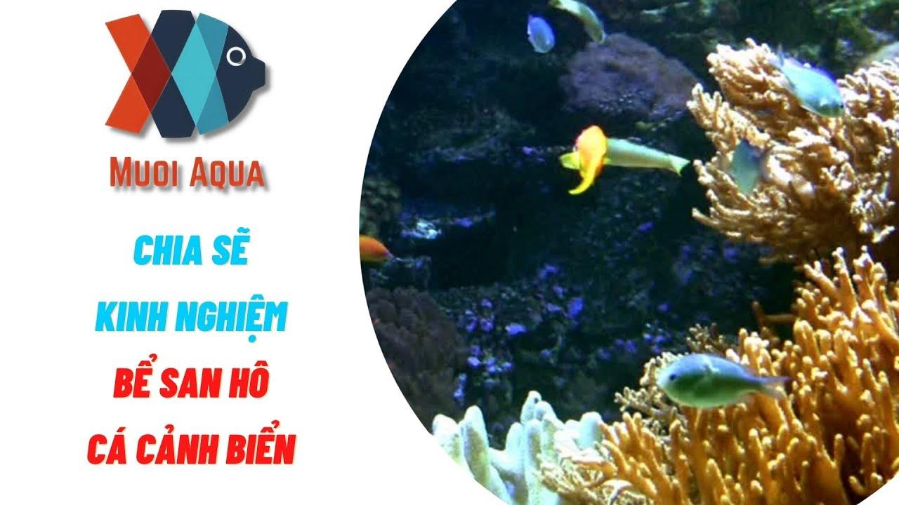 Hướng Dẫn Bể Cá Cảnh Biển Nước Mặn